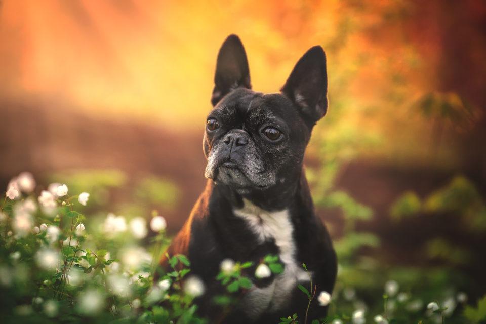 Cedar Rapids Pet photographer